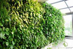 Zielona ściana w prywatnym mieszkaniu - Kraków maj 2014 Maj, Herbs, Herb, Medicinal Plants