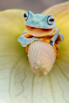 Photograph Smile 02 by Hendy Mp on Les Reptiles, Reptiles And Amphibians, Mammals, Funny Frogs, Cute Frogs, Happy Animals, Cute Animals, Beautiful Creatures, Animals Beautiful