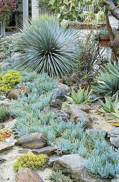 Drought-tolerant plantings, from Water-Wise Plants for the Southwest, by Nan Sterman, Mary Irish, Judith Phillips and Joe Lampl. Plants, Succulents, Southwest Landscaping, Xeriscape Landscaping, Native Garden, Rock Garden Landscaping, Waterwise Garden, Succulent Garden Design, Water Wise Plants