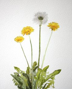 Dandelions 8x10 Watercolor by CKpigments on Etsy, $25.00