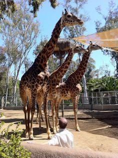 San Diego Zoo. San Diego, CA.