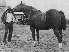 BUD WARREN PICTURED WITH HIS GREAT STALLION LEO