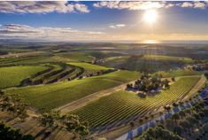 What a beautiful view of McLaren Vale, the home of . How lucky are we! Stunning photo from Duy Huynh Vineyard, Outdoor, Inspiration, Beautiful, Vine Yard, Outdoors, Biblical Inspiration, Vineyard Vines, Outdoor Games