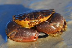 How to Cook Different Types of Crabs