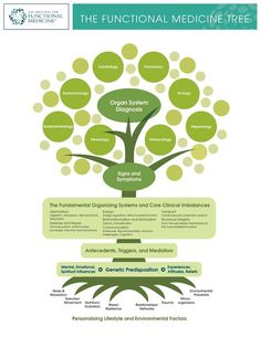 the functional medicine tree is the most beautiful concept ever created!