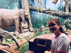 Arcade, Portugal, Port Elizabeth, Spain, Elephant, Animals, Santiago De Compostela, Animales, Animaux