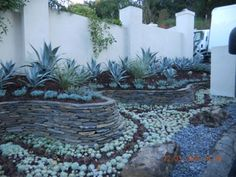 I don't know what the succulents are on the ground, at the foot of the stacked stone wall, but I love the effect of them following the curve, like a river, and the line through the middle made by the darker ones.