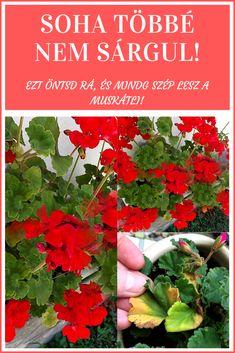 Pallets Garden, Herbs, Plants, Lawn And Garden, Palette Garden, Herb, Flora, Plant, Spice