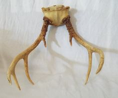 7 Point Whitetail DEER ANTLERS / HORNS natural deer horns craft supply man cave by Barndoorfinds on Etsy