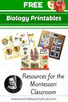 Free Montessori Biology Printables for Children | Montessori Nature