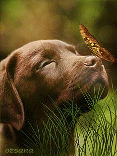 Собачка и бабочка - анимация на телефон №1268862