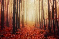 "Misty autumn forest photo print - wall art - nature photography - enchanted forest - ""Autumn Walk LVIII."" by Zsolt Zsigmond - SKU0042"