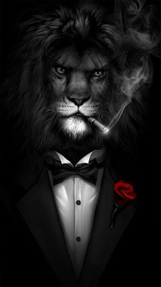 Cool Live Wallpapers Lion Live Wallpaper Black Wallpaper Funny Wallpapers Cool Wallpaper