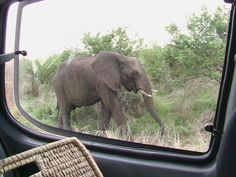 Did you get close, they asked. Is this close enough for you? South Africa, Elephant, Park, Animals, Animales, Animaux, Elephants, Parks, Animal