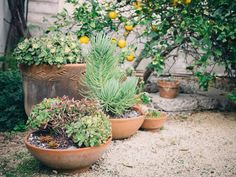 Prep Time: Preparing Your Space to Plant — Apartment Therapy's Gardening School: Lesson 10 | Apartment Therapy
