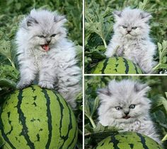 Evil watermelon