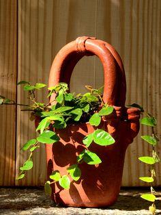 mudfingers.com - Climbing Fig - Ficus Repens