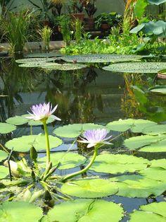 Oxford Botanical green house