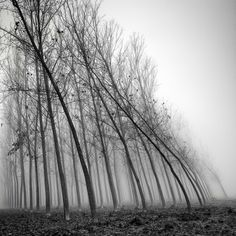 Photographer Pierre Pellegrini