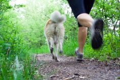 Woman running cross country with dog by blas on PhotoDune. Woman running with akita dog in summer forest, motion blur. Visible water drops from wet dog.