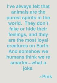 Animals have pure spirits ❤