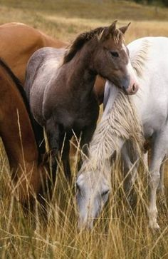 The Yearling by Norm Clasen see wild horses All The Pretty Horses, Beautiful Horses, Animals Beautiful, Zebras, Farm Animals, Cute Animals, All About Horses, Majestic Horse, Wild Mustangs