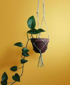 Flora, Planter Pots, Den, Plants