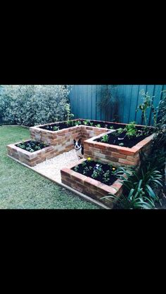 Homemade raised garden bed. Vintage clinker bricks. Recycled bricks. Do it yourself vegetable garden. Flower beds. Boston terrier.