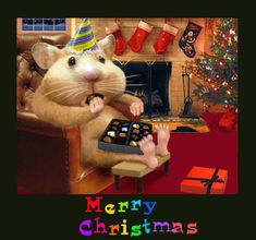 With Christmas cheer in the air in a nice comfortable chair sits a hamster with a hat stuffing chocolates and getting fat Merry Christmas And Happy New Year, Christmas Love, Christmas Cats, Christmas Pictures, Christmas Humor, All Things Christmas, Christmas Holidays, Happy Holidays, Gifs