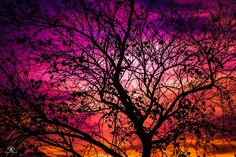 The remnants of the autumn - What stuck trees of leaves with all the wonderful sunset
