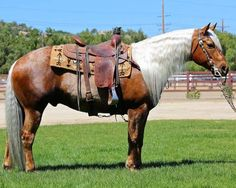 Beautiful Western attired horse:) Look at that white mane!
