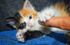 I love you, human! #kitten
