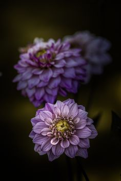 All Have Their Time Photo in Album Floral Portraits - Photographer: Paul Barson