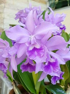 How To Keep Orchids Alive And Looking Gorgeous Unusual Flowers, Real Flowers, Amazing Flowers, Colorful Flowers, Beautiful Flowers, Bloom, Orquideas Cymbidium, Virtual Flowers, Cattleya Orchid