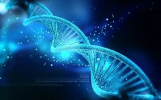 Only percent of human DNA is function, according to a new study. These findings suggest that majority of the human genome is so-called junk DNA. Human Dna, Human Genome, Human Embryo, Human Body, Dna Model Project, Dna Art, Dna Drawing, Dna Repair, Gene Expression