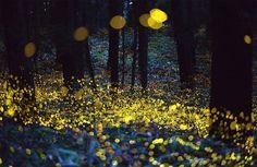 10. Luzes na floresta Com o truque de imagem, uma floresta se transforma num palco perfeito para um conto de fadas. Créditos: Rel Ohara