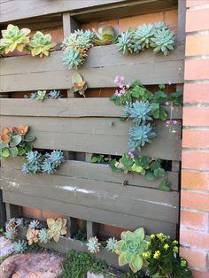 Succulent pallet garden Pallet, Succulents, Garden, Plants, Inspiration, Biblical Inspiration, Shed Base, Garten, Palette
