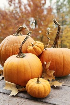 It`s the Little things that make life big! | seasonalwonderment:   ~ Autumn ~