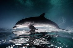 Photographer Jorge Cervera Hauser captures stunning images of animals under water.