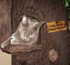 Fantasy Cat Furniture | Luxury Cat Trees | Custom Cat Condos | Cat Towers