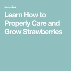 Learn How to Properly Care and Grow Strawberries