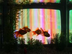 """Ambient image on a single TV screen for park/home setting? (""""TV Fish"""", Nam June Paik, 1975-88)"""