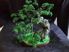 https://www.tokopedia.com/sabukkulitmurah/bonsai-replika-tanpa-perlu-perawatan-khusus