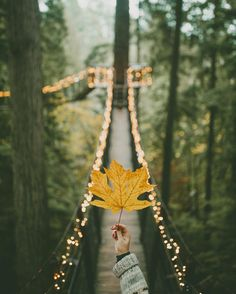 autumn imagine ~~ Vancouver City and Capilano Suspension Bridge // Photo by Rachel Barkman