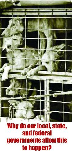 SPEAK UP - SPEAK OUT! There are an estimated 4,000 puppy mills in the U.S. that produce more than half a million puppies a year while thousands of shelter animals die!  WHY IS THIS NOT OUTLAWED!!!!!!!!!!!!!!!!!!!!!!!