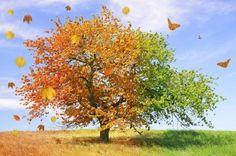 JSPuzzles - puzzles en línea - Season Tree