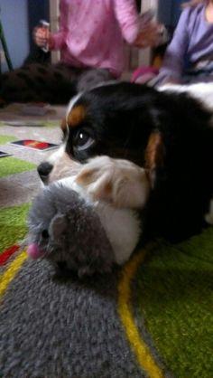Nie ma to jak zabawki dla kotów... ;)