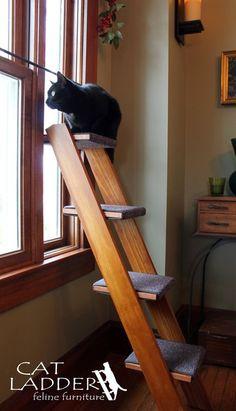 Customizable cat ladders