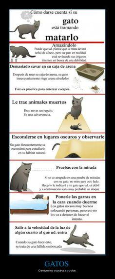 Cuidado con los gatos