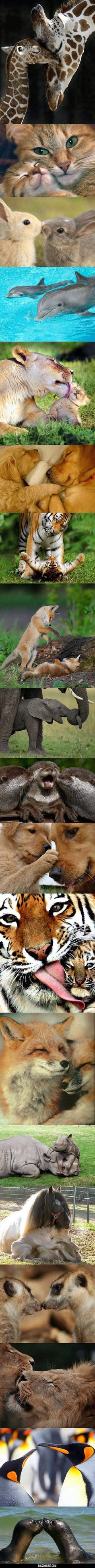 Animal Kingdom Love #lol #haha #funny